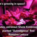 вирощування салату на мкс