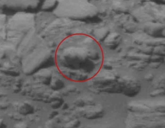 білий ведмідь на марсі