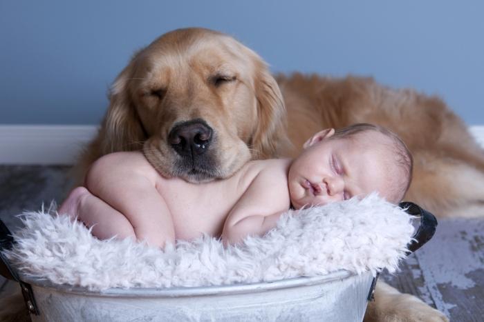домашні тварини діти