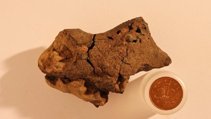 мозок динозавра