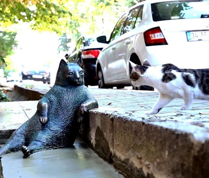 пам'ятник коту стамбул