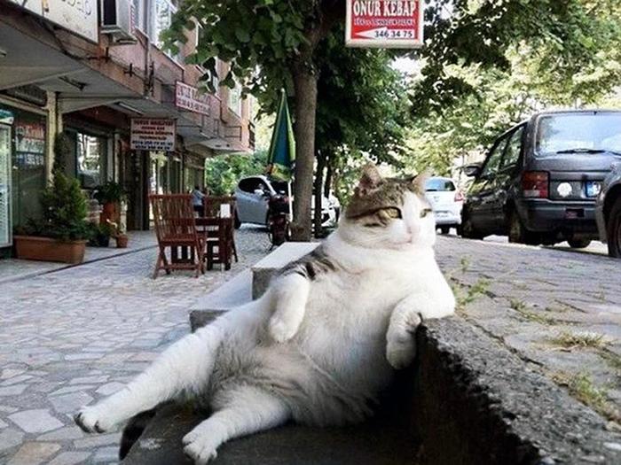 кіт-мем