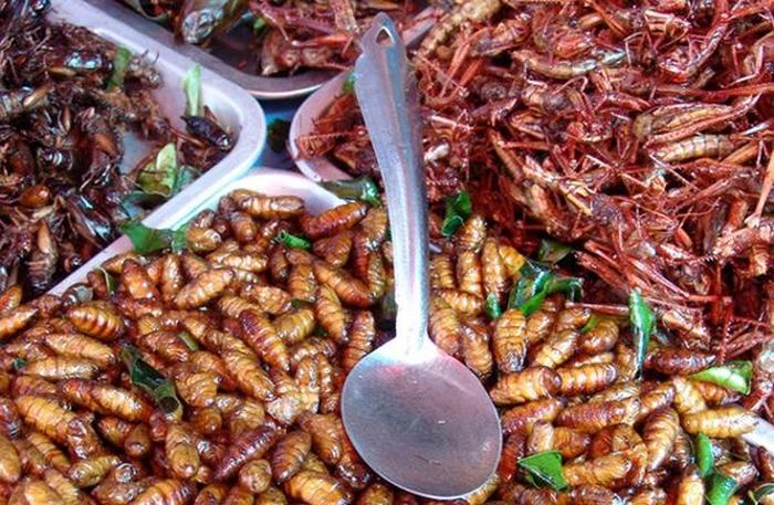 комахи їжа