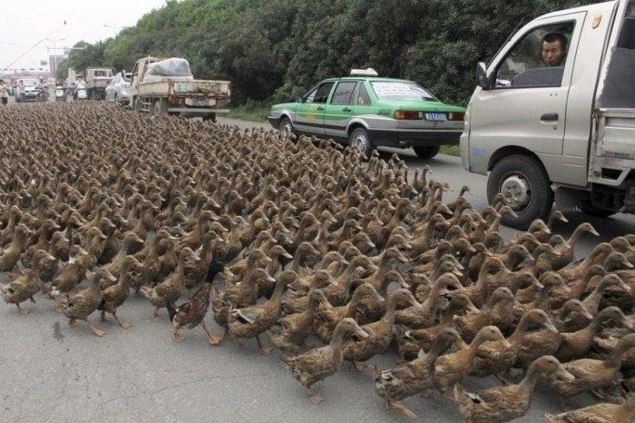 качки на дорозі китай