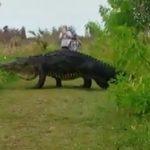 величезний алігатор