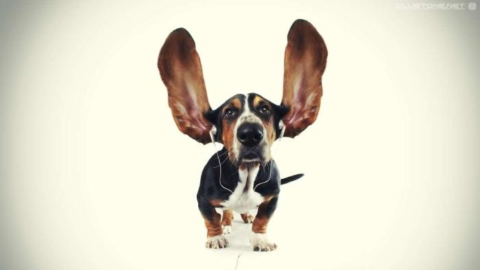 собаки музика