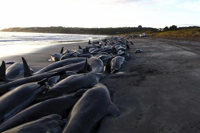 кити викидаються