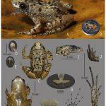 мініатюрна жаба