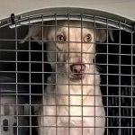 пес контрабандист