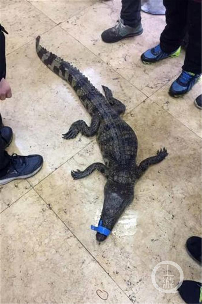 діти зловили крокодила китай