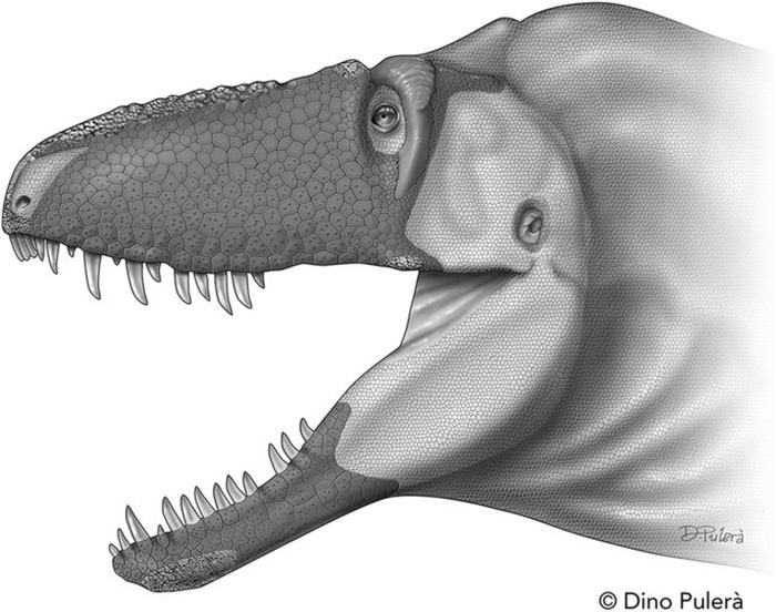 Daspletosaurus horneri sp