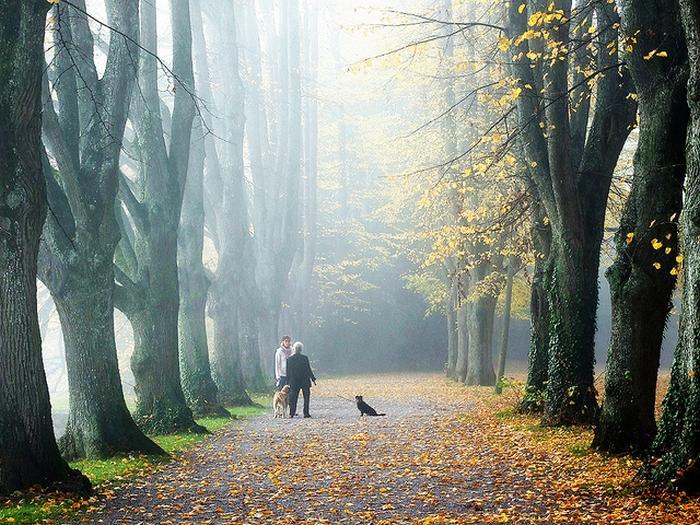 прогулянки по лісі