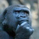 примати розумні
