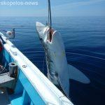 гігантська акула