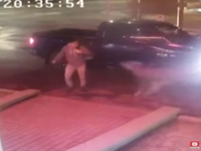 олень збив водія