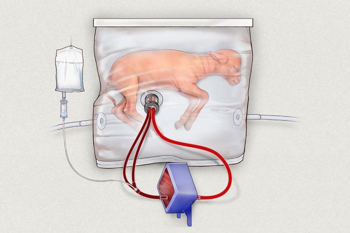 ягня у штучні утробі