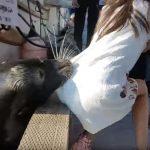 морський лев напав на дитину