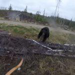 ведмідь напав на чоловіка з луком
