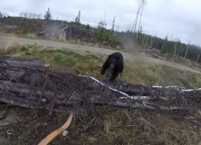 охота на медведя с луком ютуб