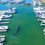 кит заплив у гавань