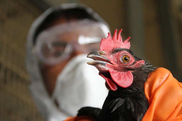 пташиний грип