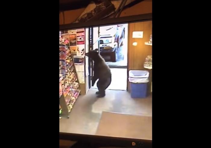 ведмідь зайшов в магазин