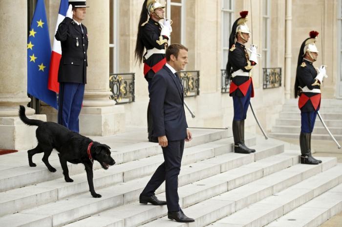 макрон зі своєю собакою