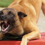 напад собак