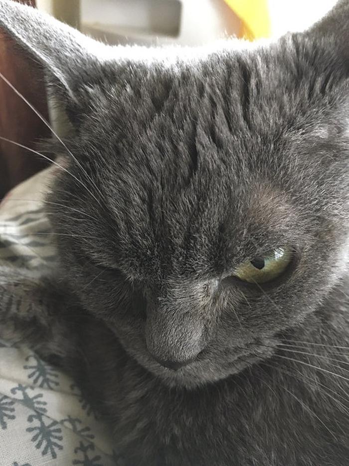 злісна кішка