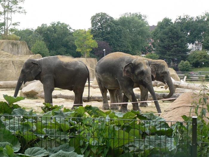 зоопарк Кельна