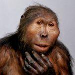 людиноподібна мавпа
