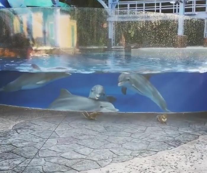 Білки вразили дельфінів