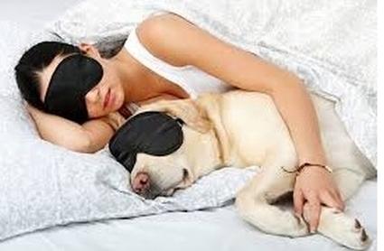 спать с собакой