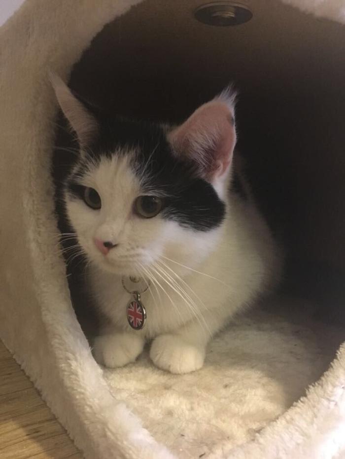 кіт Палмерстон