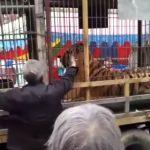 тигр відкусив два пальці