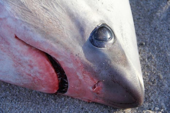 замерзлі акули