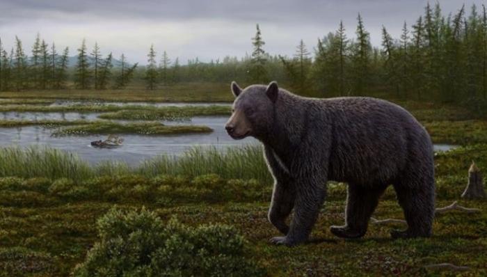 доісторичний ведмідь