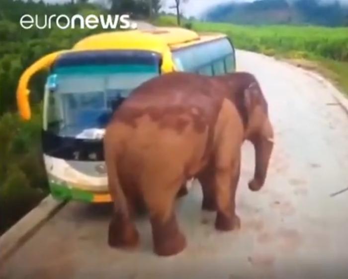 Слон атакує громадський транспорт