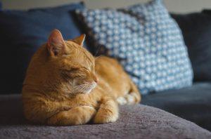 В Італії кіт успадкував 30 тисяч євро