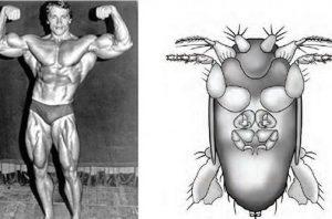 Найменшу муху на планеті назвали в честь Шварценеггера