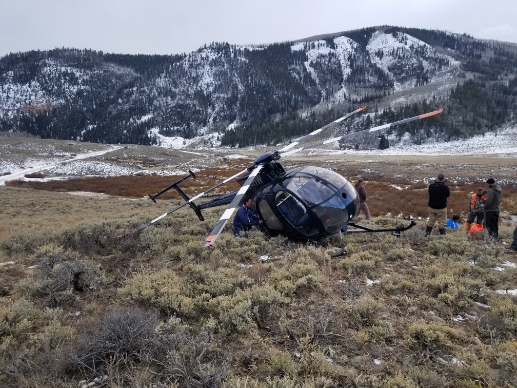 у сша вертоліт зіткнувся з оленем