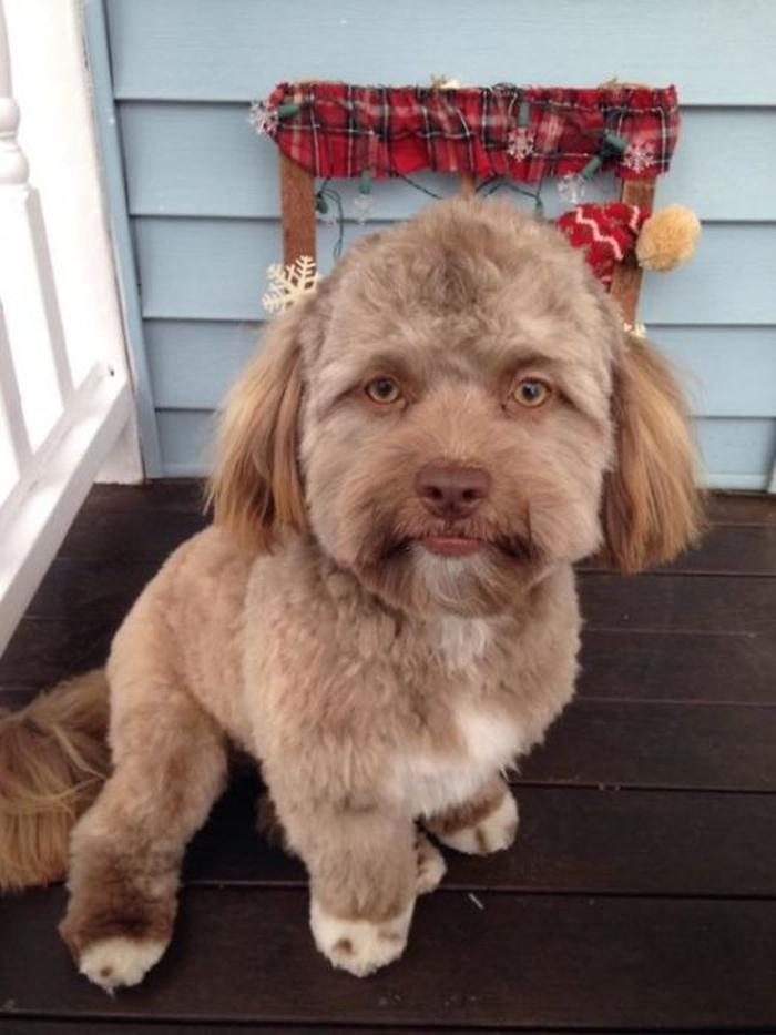собака з людським обличчям