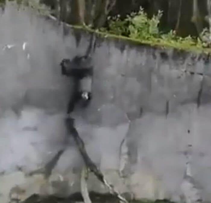 шимпанзе за допомогою палиці втік із зоопарку
