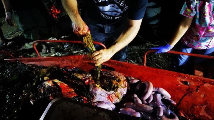 поліетилен у шлунку кита