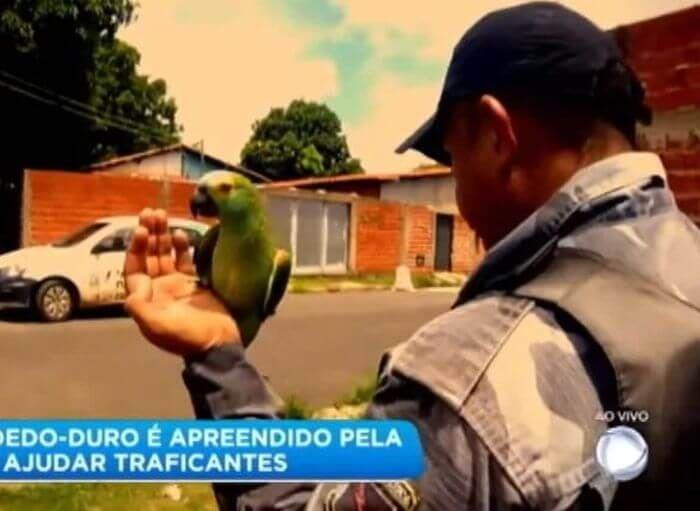 папуга наркоторговців бразилія