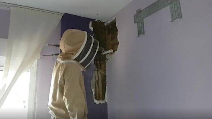 рій бджіл в стіні